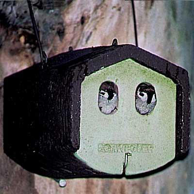 1N Caja nido para gorrión molinero y otras especies