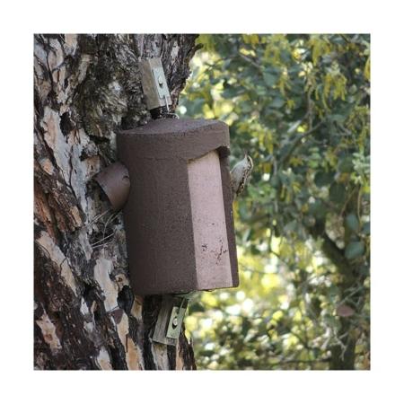 2B Caja nido para agateador común